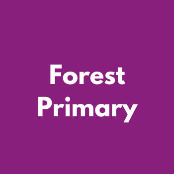 Forest Primary
