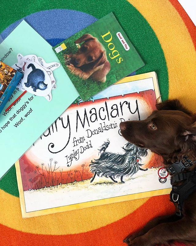 Therapy dog Cookie appreciating our dog book collection on a visit to the library today