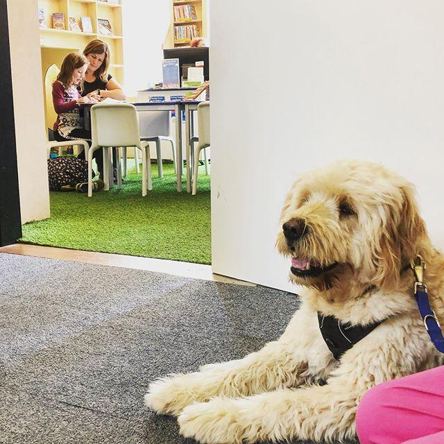 A lovely Saturday visit from Paws for Support therapy dogs  Every few months the dogs come to the Library as part of their training. It helps them get used to being around people in busy, noisy spaces, which in turn makes the visits very beneficial for the people they support #libraries #therapydog #dogsofinstagram #pawsforsupport #guernsey