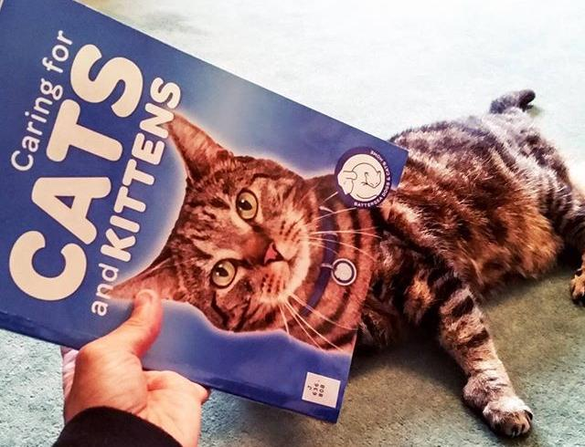 The weather may not be purrfect but we hope this #bookfacefriday is the cats whiskers! #bookface #puntastic #puns #badjokes #library #librarylife #librariesofinstagram #cat #cats #catsofinstagram #catbook #books #libraries #catswhiskers #kittens